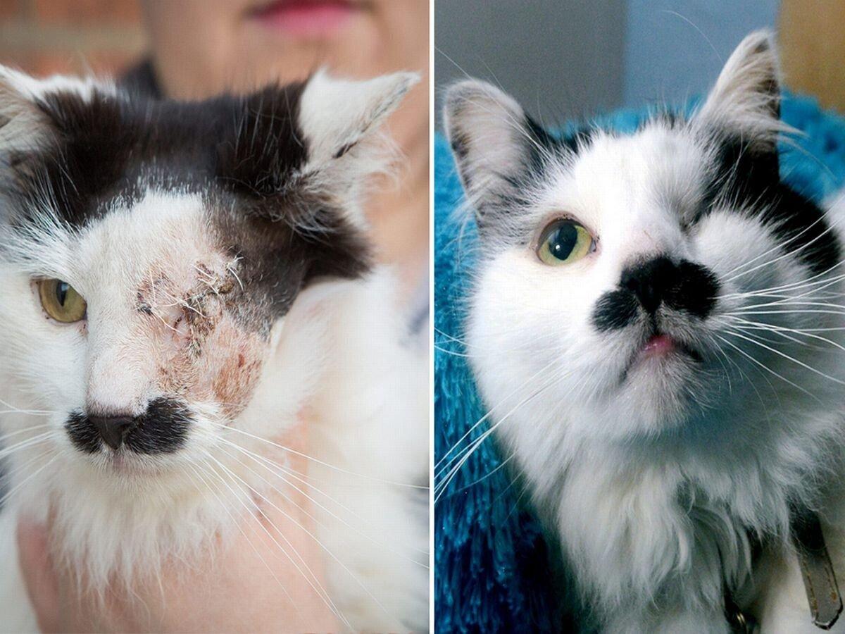 Main-HitlerCat2.jpg 약혐) 히틀러 닮았다는 이유로 한쪽 눈 실명당한 고양이.jpg
