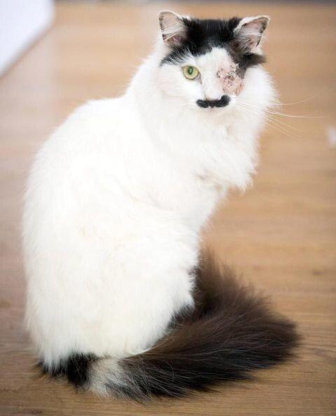 19db5304769f5e28aa6c4b7c08df5221.jpg 약혐) 히틀러 닮았다는 이유로 한쪽 눈 실명당한 고양이.jpg