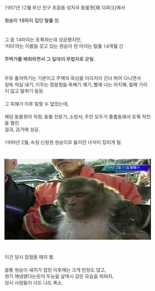 1.jpg 1997년 동물원 원숭이 집단 탈출 사건