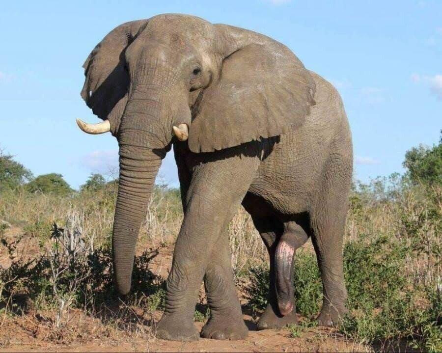 2cfe103e43693e3e4d83f641a4452367.jpg 동물들의 물건 크기.jpg