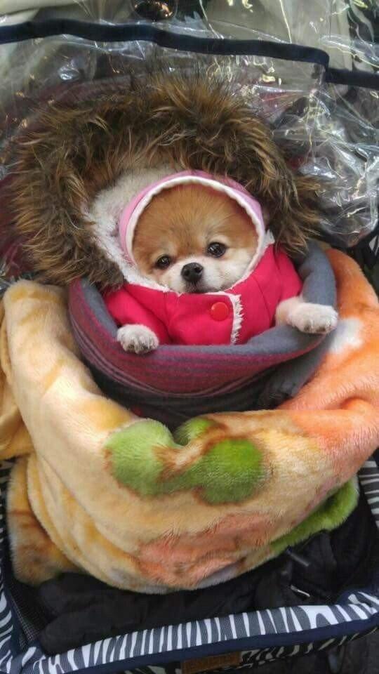 Internet_20200206_203146_3.jpeg 추운 날 할머니의 강아지 패션 코디