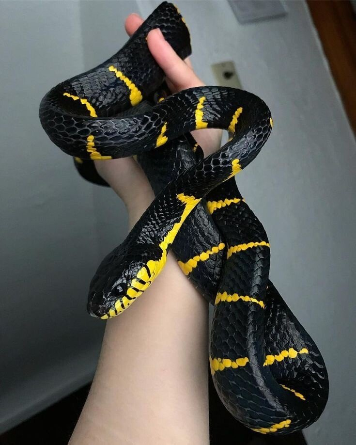 1CCCE7C9-160D-42C9-B878-DF809A2D49CF.jpeg 특이한 색 뱀들