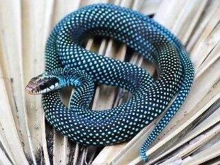 8CAD92C1-5DE9-4138-BE78-1A31BB66629F.jpeg 특이한 색 뱀들
