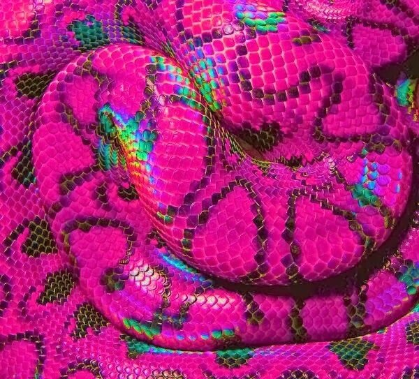 1ECD0503-AE69-4A70-9FF4-851623F0439E.jpeg 특이한 색 뱀들