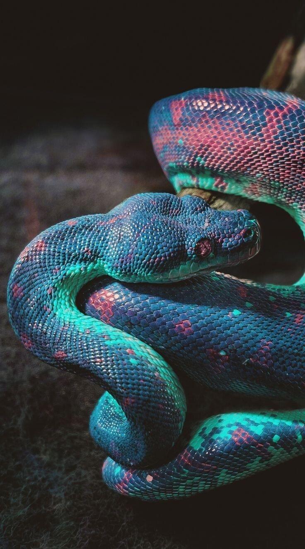 1E6C640D-F2B0-49EC-8423-F405E4EFC8CC.jpeg 특이한 색 뱀들