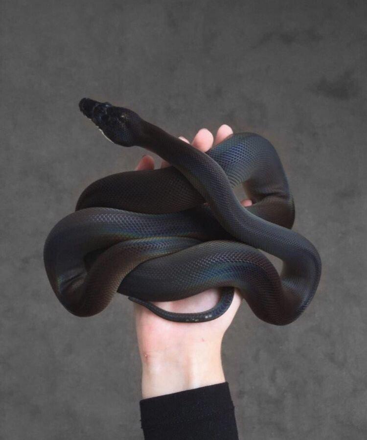 15B9521B-D8F2-46C1-BED8-E3E2FEAA6920.jpeg 특이한 색 뱀들