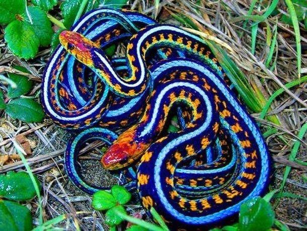 66DA87DB-C8AC-45EB-AB35-65B60739CC3B.jpeg 특이한 색 뱀들