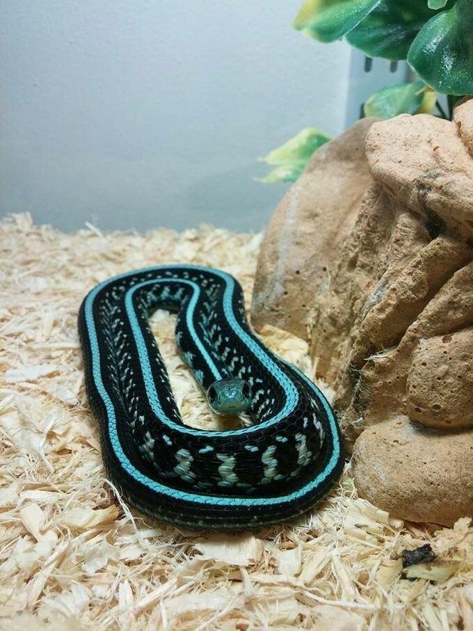 6EA03B1F-E294-4D12-9FAD-CC5E953A2BD7.jpeg 특이한 색 뱀들