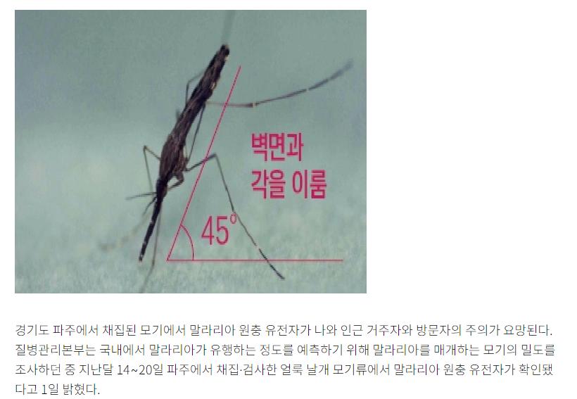 """03.png [속보] 국내 말라리아 감염 모기 확인…""""코로나19와 증상 비슷"""""""