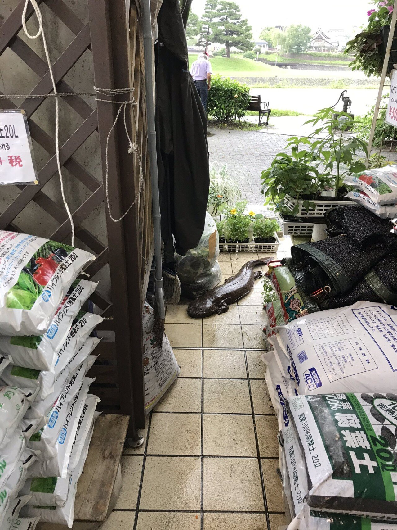 Ecm_aFhVcAEMNUm.jpg 일본 홍수물이 빠지고 나타난 이상한 녀석.jpg
