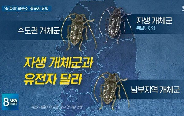0B577809-B12B-4EB3-82BB-80FD91202FAC.jpeg 최근 우리나라에서 숲을 파괴하는 곤충 feat(중국)