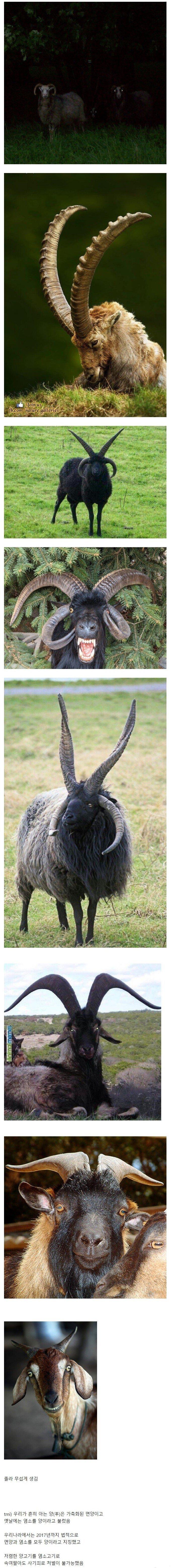 염소가 악마의 상징인 이유.jpg