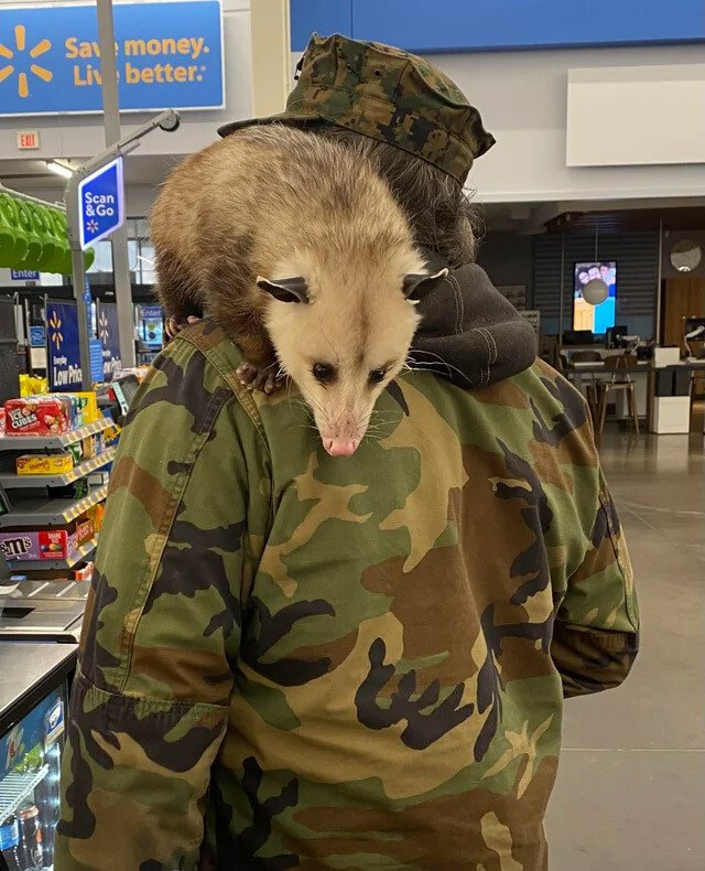 nc-opossum.jpg 약혐) 혼돈의 월마트.jpg