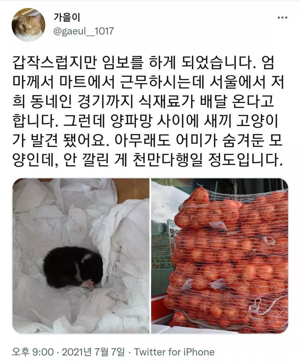 En7aX.webp.ren.jpg 고양이 이름이 양파인 이유