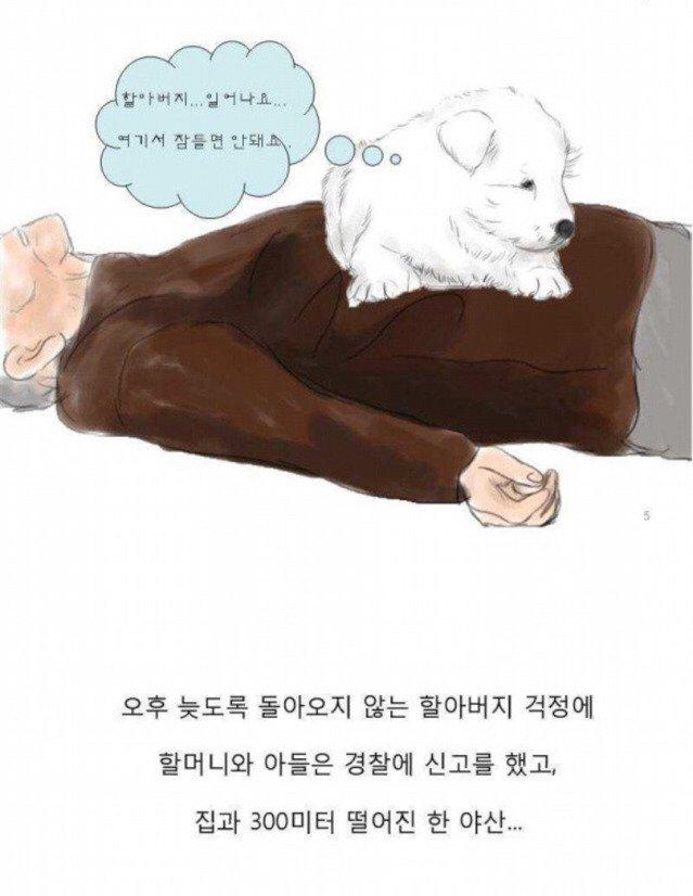 004.jpg 치매 할아버지를 지킨 아기 풍산개