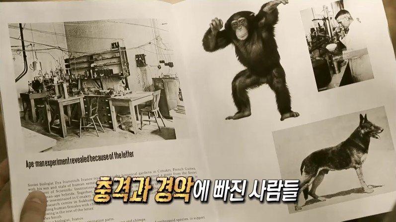 [서프라이즈] 사람과 원숭이를 교배하려던 미친 박사의 최후 (스압)